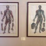 """""""A come Anatomia, Arte, Antropologia, Archeologia"""" di Carmen Cannizzaro"""
