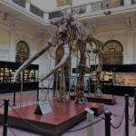 """""""Il Museo di Storia Naturale di Genova"""" di Carmen Cannizzaro"""